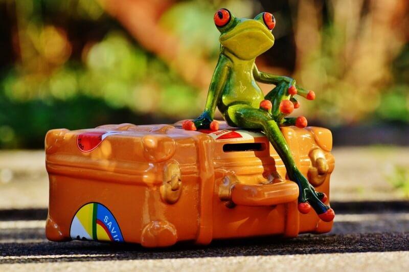 frog-travel-holiday-fun-funny-fig-go-away-animal (1)