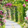 ハウステンボスバラ祭り2017|見頃はいつ?期間は?開花状況は?入場料・割引チケットなどの情報まとめ